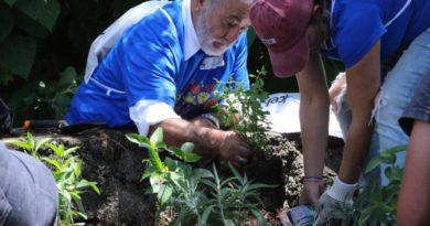 Jardines para Polinizadores, refugio y alimentación en zonas urbanas: Semaccdet